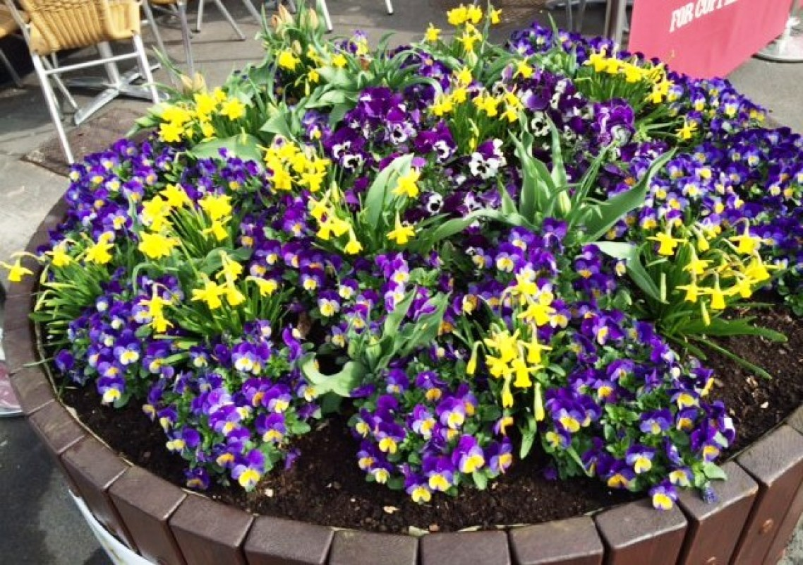New Image for LCP'S RELATIONSHIP WITH MAGHULL IN BLOOM BLOSSOMS